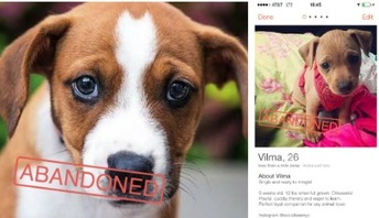 Une association propose d'adopter des chiots sur Tinder ! #PuppyLove