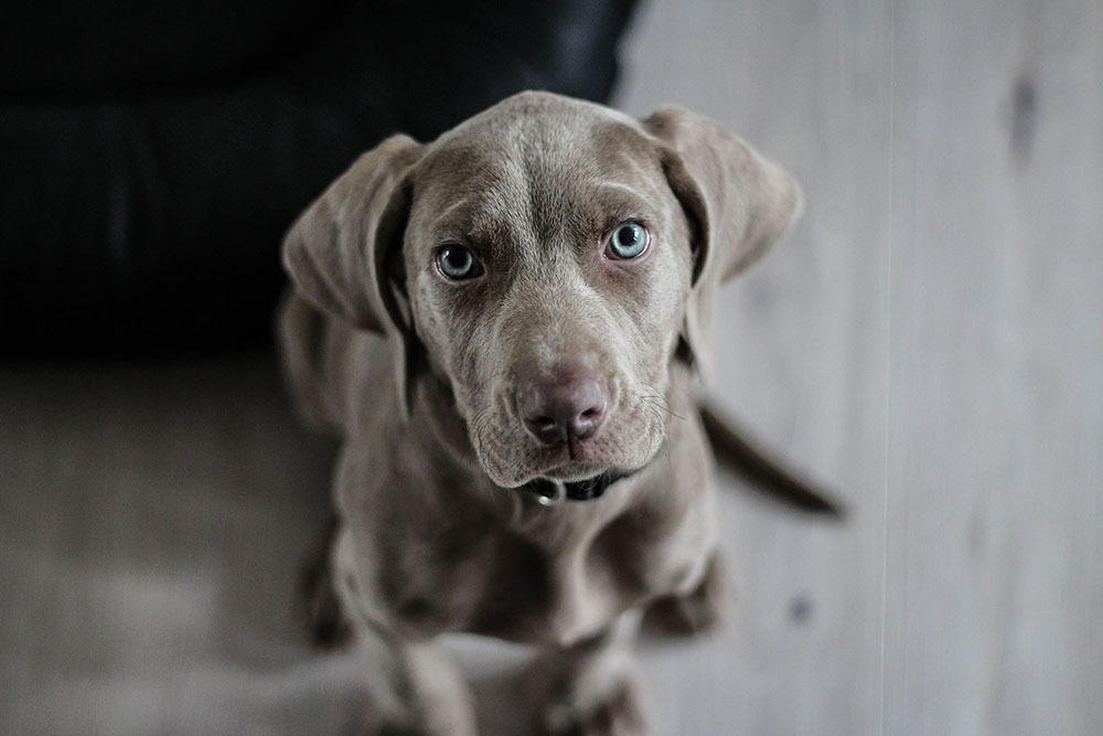 photographie d'un chien en plongée